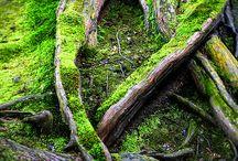 Trær og skog