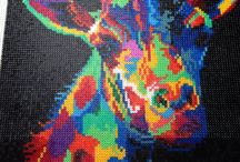 barevná zvířata