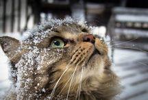 Photo::Animals
