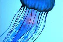 Sea Life & Plankton