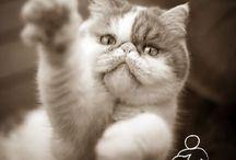 Pet Photos / Blogs about Pet Photography