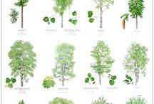 metsiemme puita
