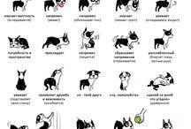 Собаки (Dogs)