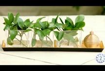 Los vídeos de Verdecora / En Verdecora queremos transmitir nuestra pasión por las flores, las plantas, las mascotas y todos sus complementos también a través de vídeos de nuestro canal de YouTube.
