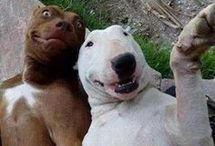 FUNNY DOGS♥♥♥