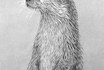 ilustración animal