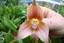 bizarre nature / flowers