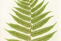 Joy: Botanical Prints / Botanical prints make wonderful artwork in your home.