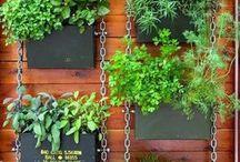 jardiniere suspendate