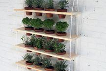 Présentation plantes