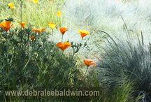 Those Fabulous Succulents! / by Brenda Pratt
