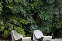 Exotic modern garden