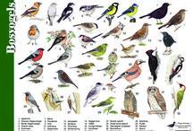 тема птицы