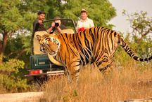Wild Life tours in India / Wild life tours in India - witness the exotic wildlife of India through our affordable India tour packages. So, book now and get the best deal we have on offer.