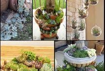 Plantas y Kokedamas