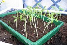 Zimmergewächshaus / Auch wenn man vielleicht keinen Garten hat - mit einem Zimmergewächshaus kann man sich dennoch an die Pflanzenanzucht wagen!