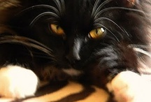 Cat Nniped (Pinned)