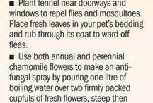 Dan' Gardening Info