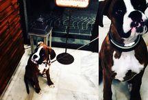 PET ❤️ Kikki e l'amore per gli animali / Da Kikkisapori a Bologna noi possiamo entrare!