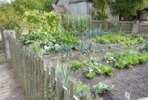 Champaign-Urbana Gardening