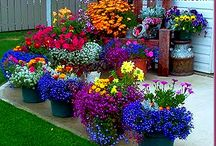 special flowers with colours