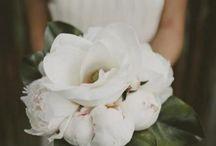 Dream Weddings to Photography