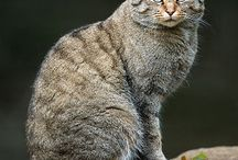 Baccat Chooses His Person story / Cat Point of View Celtan Story, Baccat Chooses His Fam