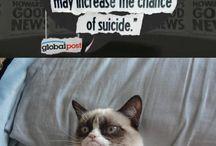 Grumpy Cat funnies / by Cans Nantz
