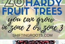 Frukt och buskar
