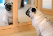 Pugs / They so cute