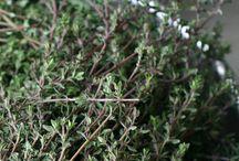 Tea - special herbs