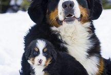 Kutyák