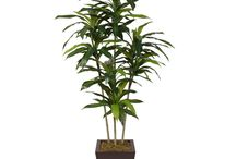 Trees / Beautiful Life-like trees to decorate your home!