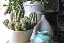 Cactus and other thorny plants