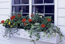 windowbox ideas / by Rosemarie Kistenmacher