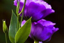 cvjece i vrtovi