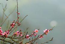 Bloem decoratie bloempotten