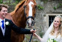 Horses at Weddings / Have a look at some of the different photographs I have taken of horses at weddings.
