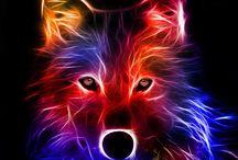 wilki / Piękne zwierzęta
