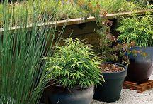 my secret garden,,,