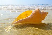 Sea shells / I love sea shells on the beach