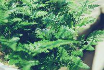 ❥Green Plants