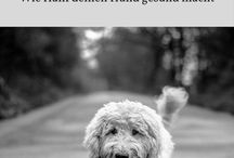 Gesunder Hund