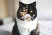 h e r e   k i t t y / nothing wrong with a cat lady