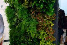 """ideer til nye eden / Eksempler på planter til å ha i kunstutstillingen """"Nye Eden"""" Tenker samplantinger med """"eksotiske"""" planter som har store grønne blader. Sammen med klatreplater eller vertikale løsninger til inngang og ved søylene."""