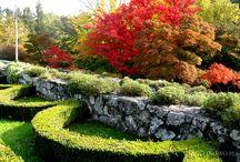 Kolory jesieni - colors of autumn / jesienne krajobrazy, rośliny i ogrody