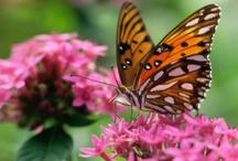 Flowers & Butterflies / by Karen - Cat's Eye Originals