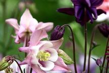 Mom's Own Shady English Garden / by JR Merritt