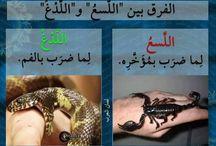 العربية سيدة اللغات