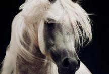 Picture the horse